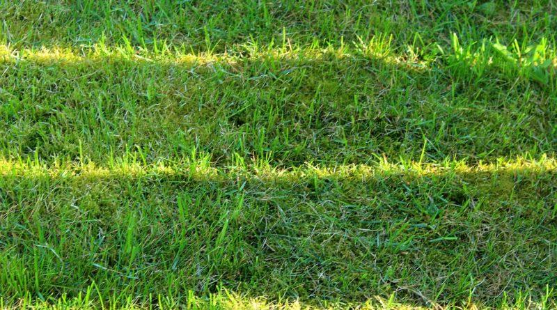 Pečujeme o trávník na jaře. Ať je zase brzy krásný
