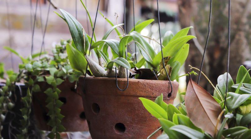 Dvě pokojové rostliny, které můžete pěstovat v bytě
