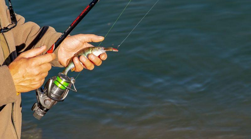 Rybářství je taky sport! Jaké ryby u nás chytají rybáři nejméně a naopak nejvíce?